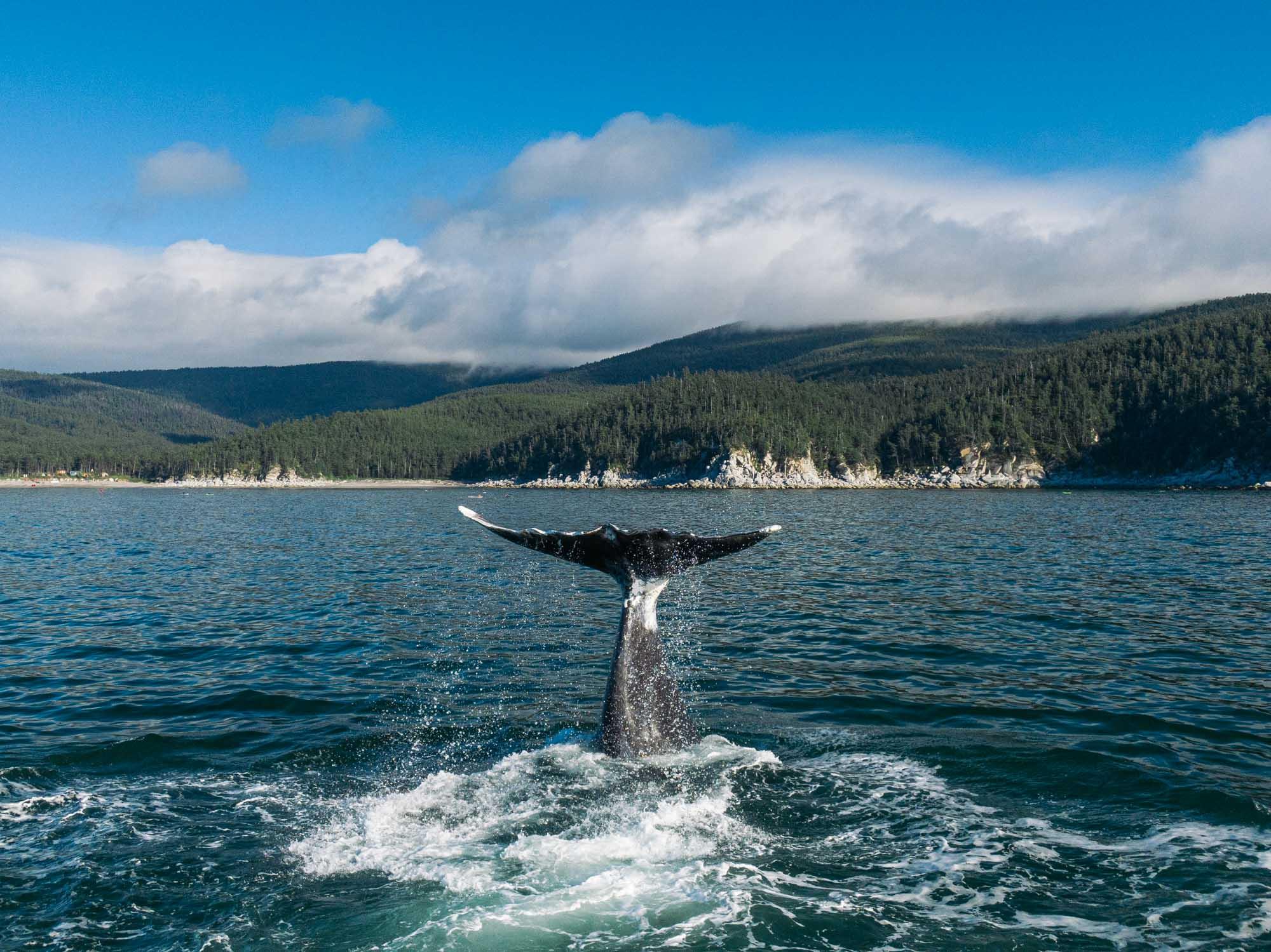 Экспедиция под парусами на Шантарские острова'2020: навстречу китам
