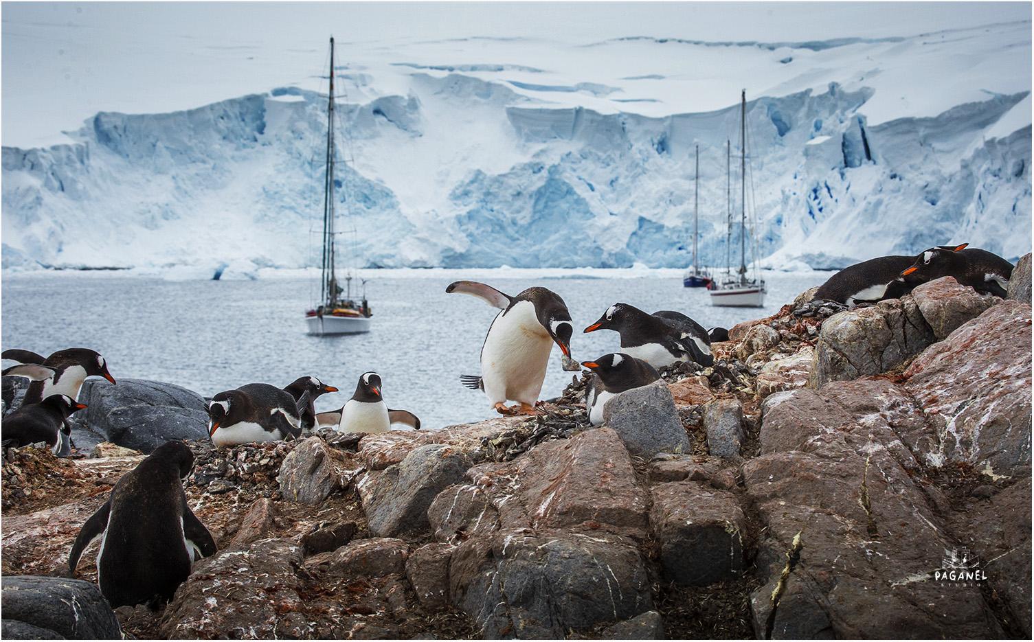 Год Антарктиды: открытия, большие путешествия и неизвестные факты