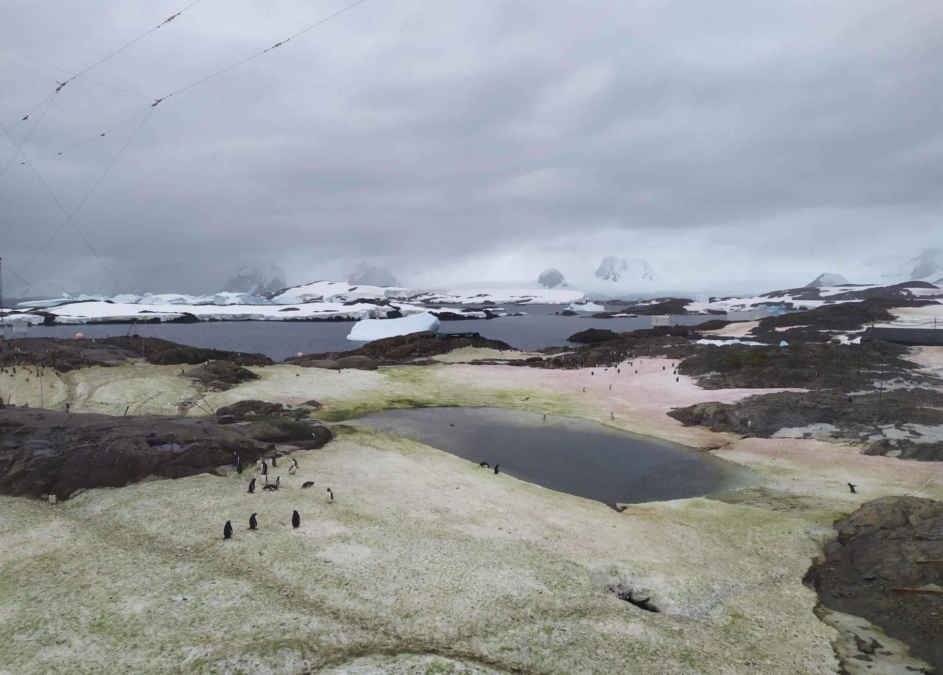 В Антарктиде появился зелено-малиновый снег