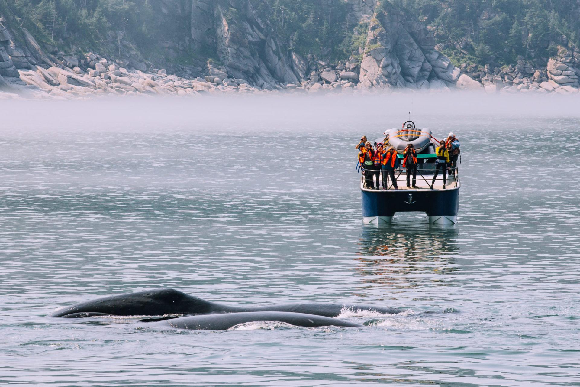 Китовая бухта